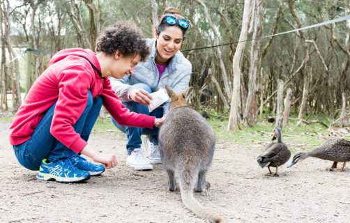 Young male feeding kangaroo at OC Connections Day Support program activity Animal Lovers